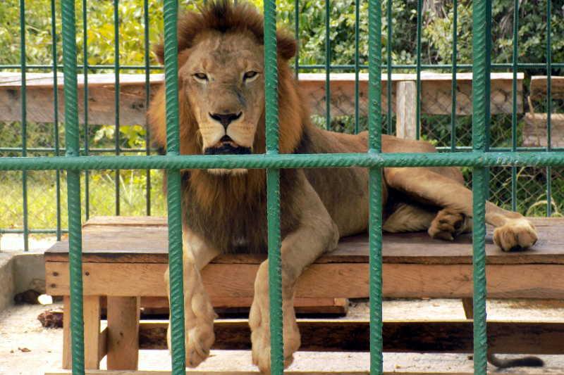 Visite au zoo slide 4
