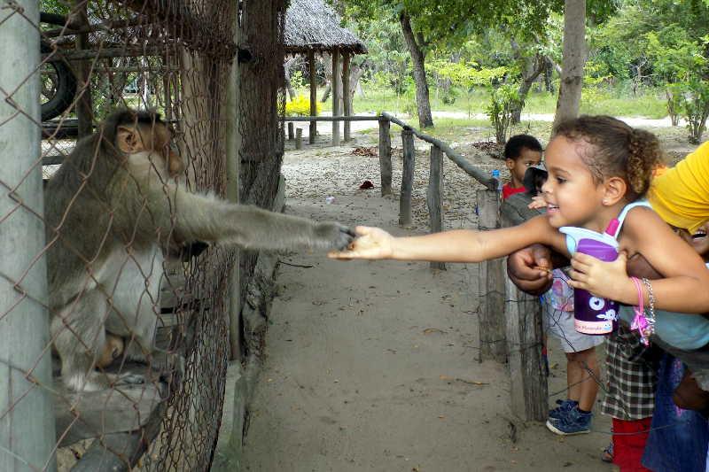 Visite au zoo slide 7