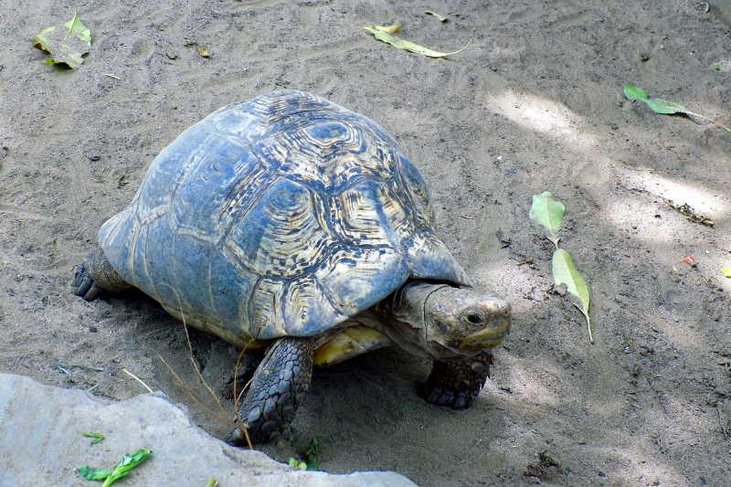 Visite au zoo slide 9